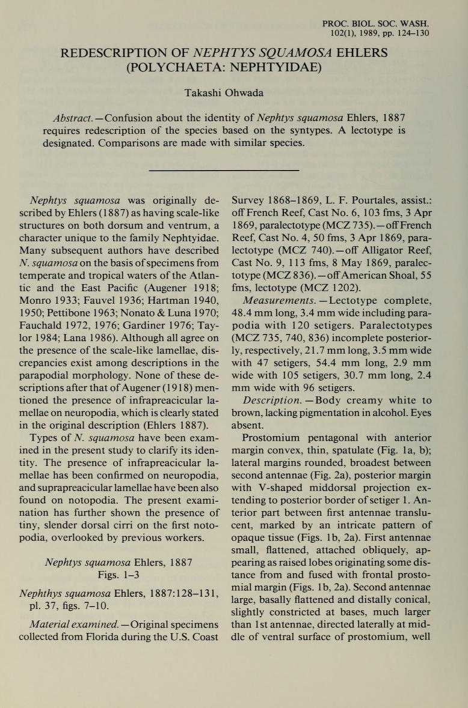 Redescription of <i>Nephtys squamosa</i> Ehlers (Polychaeta: Nephtyidae)